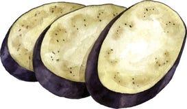 Akwareli purpur oberżyna ilustracja wektor