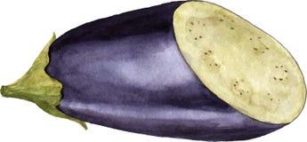 Akwareli purpur oberżyna ilustracji