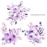 Akwareli purpurowe róże, różanecznik kwitną bukiety i rozgałęziają się ilustracja wektor