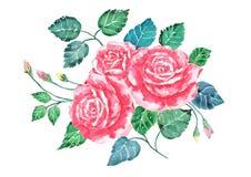Akwareli róż bukieta różowa sztuka Ręka malująca kwitnie z kolorowymi liśćmi odizolowywa Ilustracja valentine Zdjęcie Stock