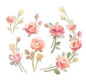 Akwareli róż bukiety ustawiający, odosobniona klamerki sztuka royalty ilustracja