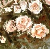Akwareli róż nagi tło Obrazy Royalty Free