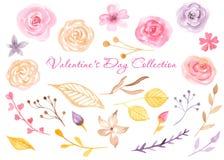 Akwareli róże, liście, kwiaty, pączki, gałąź ilustracji