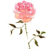 Akwareli róży kwiat Zdjęcie Stock