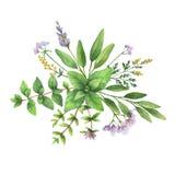 Akwareli ręka malował bukiet z dzikimi ziele i pikantność ilustracji