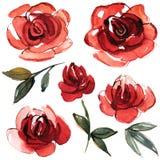 Akwareli ręka malował kwiatów elementy dla zaproszenia, ślubna karta, urodzinowa karta czerwone róże Zdjęcia Stock