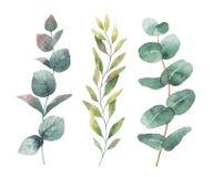 Akwareli ręka malujący wektorowy ustawiający z eukaliptusem opuszcza i rozgałęzia się ilustracja wektor