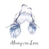Akwareli ręka rysująca gołąbka Odosobniona artystyczna ilustracja z ptakiem Zdjęcie Royalty Free