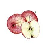 Akwareli ręka rysująca ilustracja jabłka Obraz Royalty Free