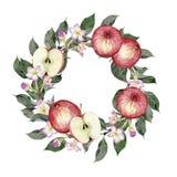 Akwareli ręka rysująca ilustracja jabłka, gałąź i kwiaty, Fotografia Stock