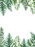 Akwareli rama z tropikalnymi liśćmi i houseplants liśćmi greenfield sukulent projekta elementu kwiecisty ilustraci wektor Doskona royalty ilustracja