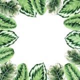 Akwareli rama z tropikalnymi li??mi i houseplants li??mi greenfield sukulent projekta elementu kwiecisty ilustraci wektor Doskona royalty ilustracja