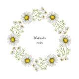 Akwareli round wektorowa rama chamomile ilustracji
