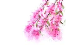 Akwareli Sakura lub ilustracja wektor