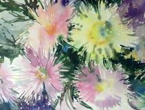 Akwareli sztuki tła delikatna kolorowa natura kwitnie asteru bukieta świeży romantycznego Obrazy Royalty Free