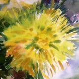 Akwareli sztuki tła kwiatu abstrakcjonistycznej pięknej kwiecistej dalii romantyczny nawierzchniowy kolorowy textured mokry obmyc Obraz Stock
