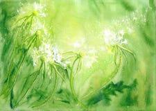 Akwareli tło z dandelions royalty ilustracja