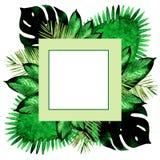 Akwareli tropikalna palma opuszcza bezszwowego wzór ilustration Obraz Stock