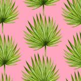 Akwareli tropikalna palma opuszcza bezszwowego wzór Obrazy Royalty Free