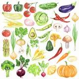 Akwareli warzywa Ustawiający ilustracja wektor