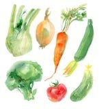 Akwareli warzywa Ustawiający Zdjęcia Stock