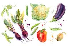 Akwareli warzywa Ustawiający Obraz Stock