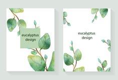 Akwareli wektorowa ręka malował zieloną kwiecistą kartę z srebnego dolara eukaliptusem royalty ilustracja