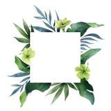 Akwareli wektorowej zielonej karty tropikalni liście i kwiaty odizolowywający na białym tle zdjęcia royalty free
