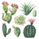 Akwareli wektorowy ustawiający kaktusy i sukulent zasadza odosobnionego na białym tle Obrazy Stock