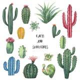 Akwareli wektorowy ustawiający kaktusy i sukulent zasadza odosobnionego na białym tle Zdjęcie Stock