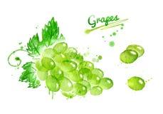 Akwareli wiązka winogrona Zdjęcia Stock