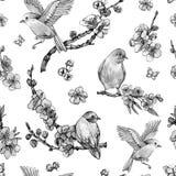 Akwareli wiosny bezszwowy wzór, rocznik kwiecista ilustracja ilustracja wektor