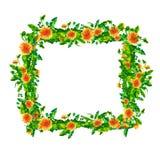 Akwareli wiosny dandelion kwitnie, okwitnięcie kwadrata ramy isola Zdjęcie Royalty Free