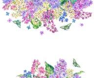 Akwareli wiosny kwiecista karta, kwitnie gałąź bez Fotografia Stock
