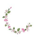 Akwareli wiosny okwitnięcia kwiaty Zdjęcia Royalty Free