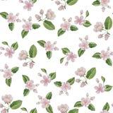 Akwareli wiosny okwitnięcie kwitnie bezszwowego wzór Zdjęcia Stock