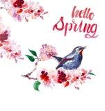 Akwareli wiosny ptak na Sakura gałąź Ręka malujący czereśniowy okwitnięcie, odosobniony ilustracja wektor