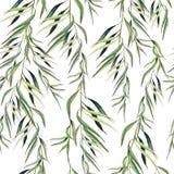 Akwareli witn eukaliptusa bezszwowa deseniowa gałąź szczotkarski węgiel drzewny rysunek rysujący ręki ilustracyjny ilustrator jak royalty ilustracja