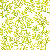 Akwareli zielone flory Fotografia Royalty Free