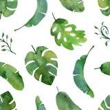 Akwareli zielonej rośliny wzór na białym tle ilustracji