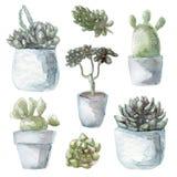 Akwareli zielonych rośliien tłustoszowata inkasowa ilustracja, odizolowywająca na białym tle Obraz Stock
