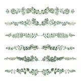Akwareli ziołowej organicznie natury kwieciści liście ilustracyjni obrazy stock