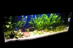 akwariów fisches niektóre tropikalni Obraz Royalty Free