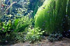 akwariów fisches niektóre tropikalni Fotografia Stock