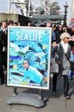 akwarium życia morze Obrazy Stock