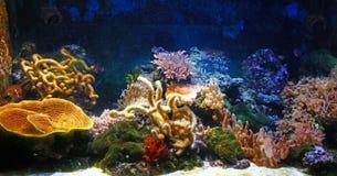 akwarium Obrazy Stock