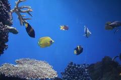 akwarium Fotografia Royalty Free