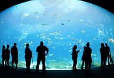 akwarium Obraz Stock
