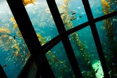 Akwarium 3 obrazy stock