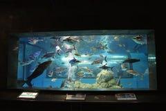 Akwarium Zdjęcia Stock